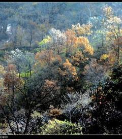 [林州游记图片] 中原河南:太行大峡谷之桃花谷