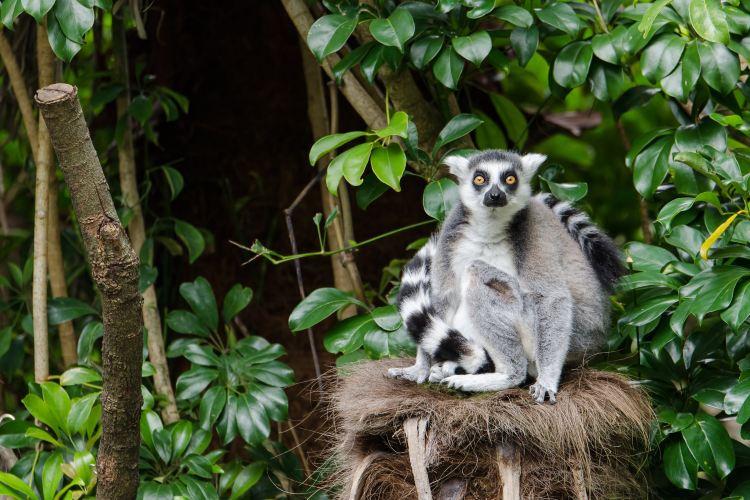 奧克蘭動物園1