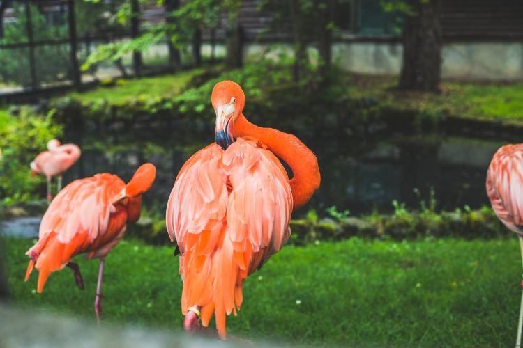 Asahiyama Zoo3
