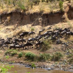 肯尼亚游记图文-羊年出游第三站——肯尼亚