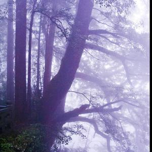 天目山游记图文-山美水好树更魅的西天目山 (4日游)