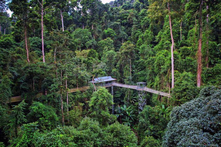 Xishuangbanna Tropical Rainforest National Park Wangtianshu Scenic Area1