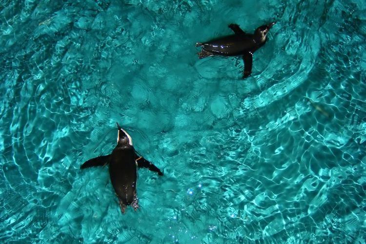 新英格蘭水族館2