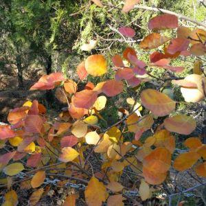 八达岭国家森林公园旅游景点攻略图
