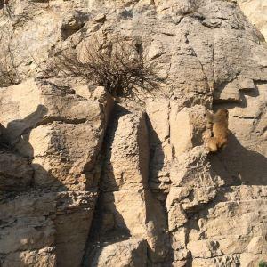 太行山猕猴国家级自然保护区旅游景点攻略图