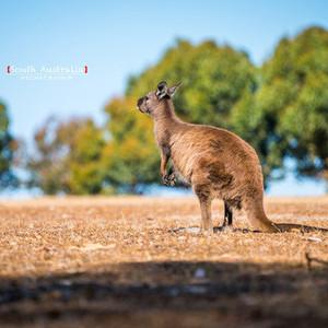 阿德莱德游记图文-南得一见,非凡南澳