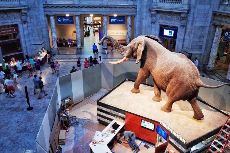 미국 자연사 박물관3
