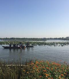 [白洋淀游记图片] 这个国庆节全家白洋淀,雄县温泉双重奏