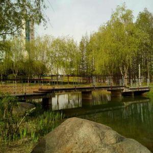 雪枫公园旅游景点攻略图