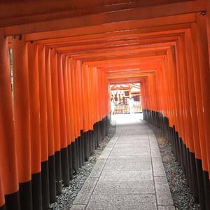 东京都游记图文-这一次的相遇。。。烂漫日本东京京都短游。。。