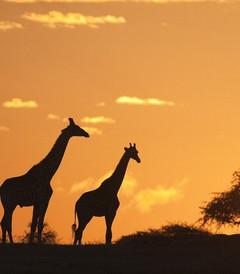 [坦桑尼亚游记图片] 一生必去一次的坦桑尼亚|回归狂野,见证热气腾腾的生机