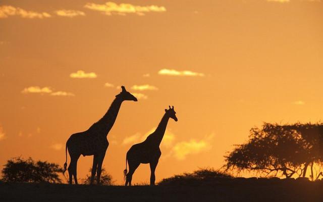 一生必去一次的坦桑尼亚|回归狂野,见证热气腾腾的生机