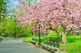 节后赏花攻略,别等到花儿都谢了!