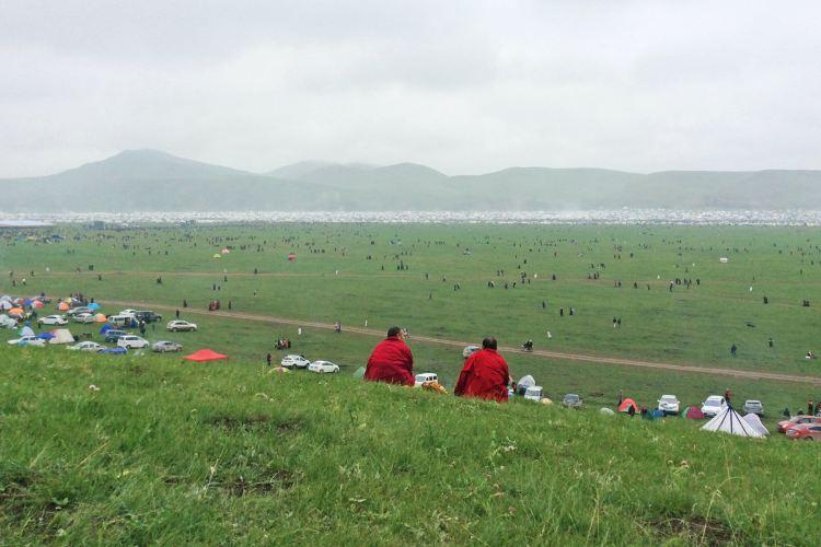 甘加草原4