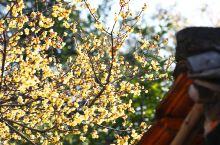 #春节在路上#猴年春晚赵薇唱响了?桐城六尺巷