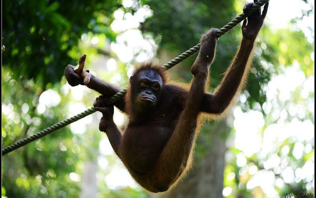 猴年出游第一站——亚庇、山打根休闲游