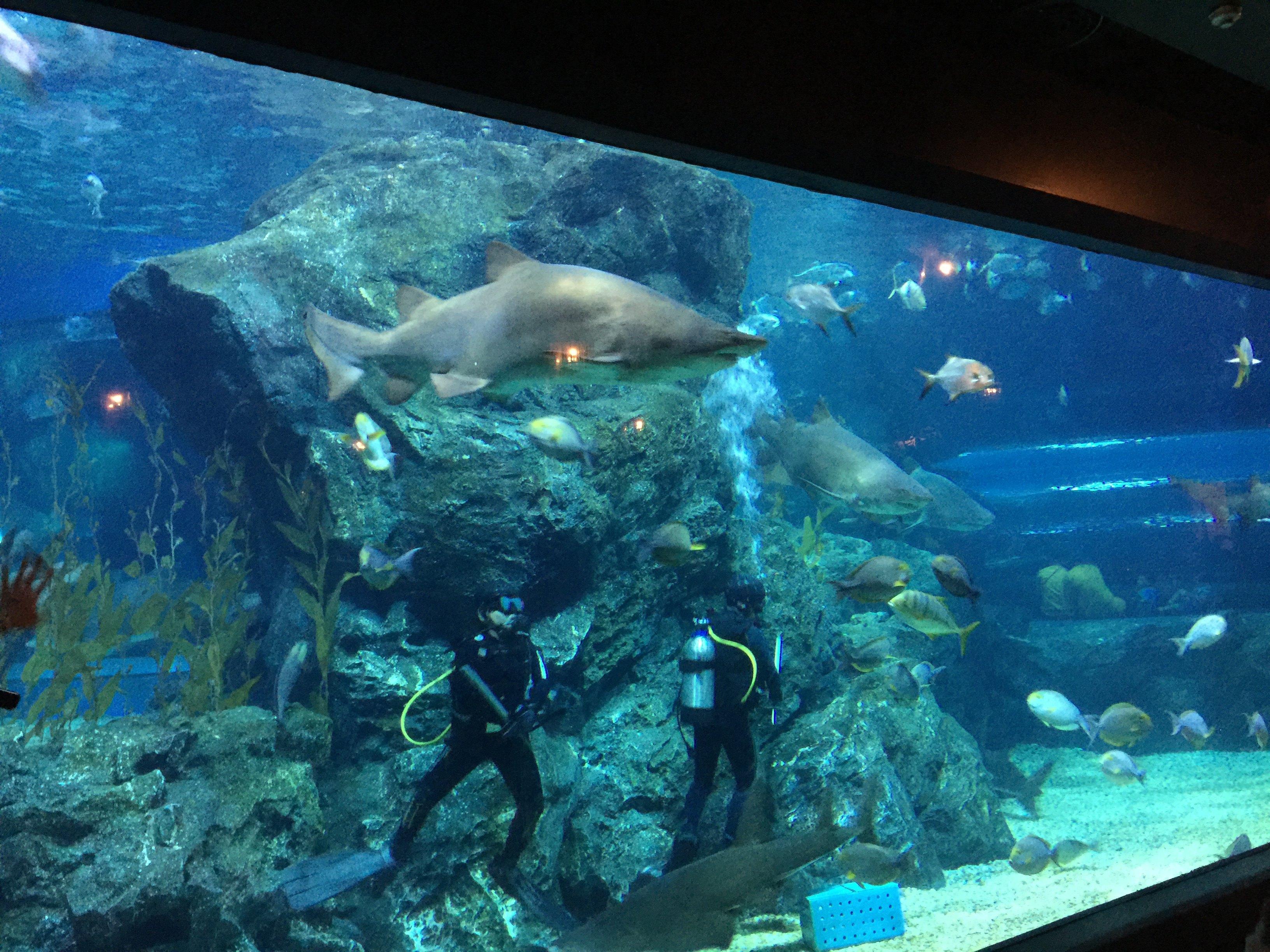便宜鲨鱼海洋_【携程攻略】曼谷曼谷暹罗海洋世界景点,海洋馆设立在商场的 ...