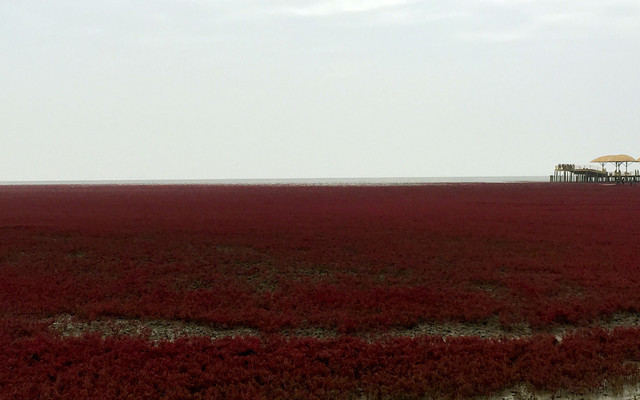 盘锦红海滩漫步