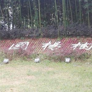 中国杨树博物馆旅游景点攻略图
