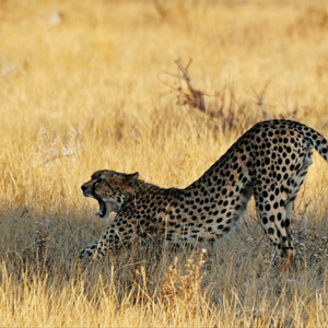 肯尼亚游记图文-走出非洲 走不出的梦想(中)第6-10天(2)