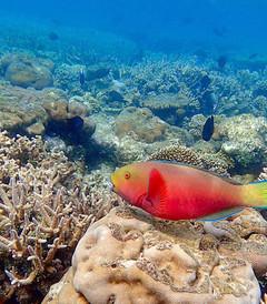 [马尔代夫游记图片] 马尔代夫~Lily岛~我的海洋世界畅游记