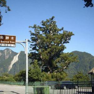 碧绿神木旅游景点攻略图
