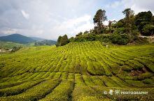 英国人最喜欢的马来西亚度假地——金马伦高原