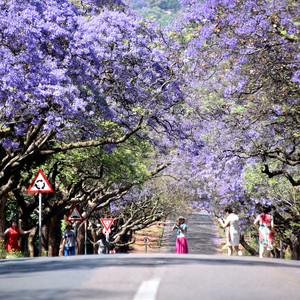 约翰内斯堡游记图文-彩虹国度-南非之旅