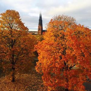马尔默游记图文-北欧的秋天(绝对不容错过的精华帖)