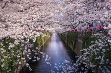 2018年最早的樱花预测来了!机票买起来,酒店订起来!