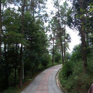 塔山森林公园旅游景点攻略图