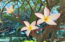 天竺的花——印度苏拉特鲜花专辑