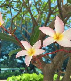 [印度游记图片] 天竺的花——印度苏拉特鲜花专辑