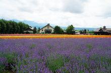【论北海道的夏季打开方式】道东道央慢慢遊