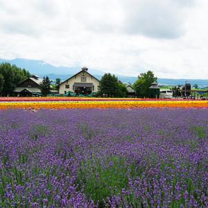 美瑛町游记图文-【论北海道的夏季打开方式】道东道央慢慢遊