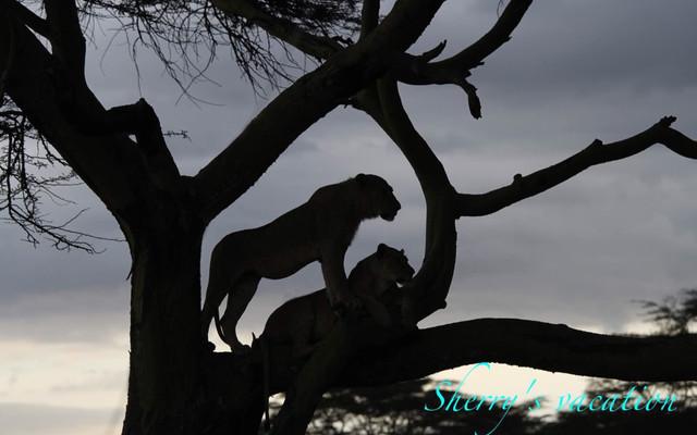 走进非洲-2011年8月肯尼亚之旅
