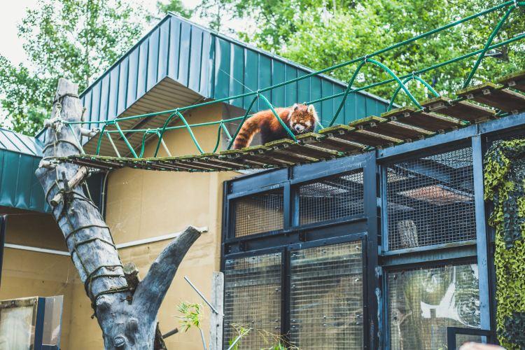 Asahiyama Zoo4