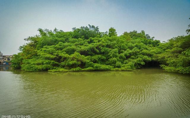 小鸟天堂,看巴金笔下的《鸟的天堂》独木成林