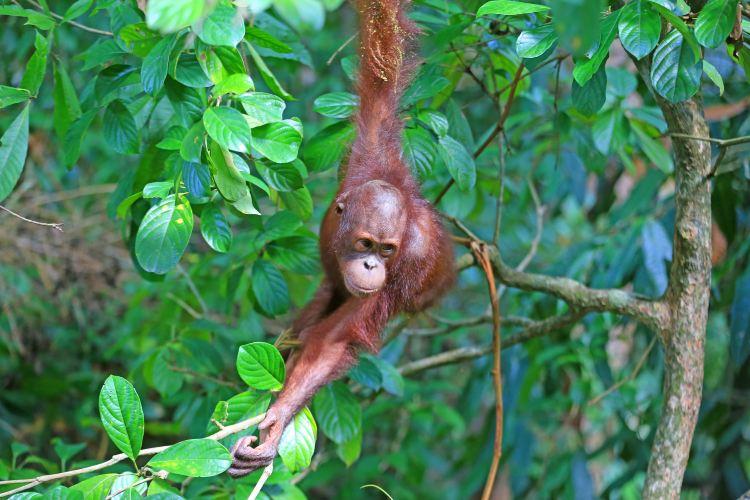 西必洛猿人保護區1