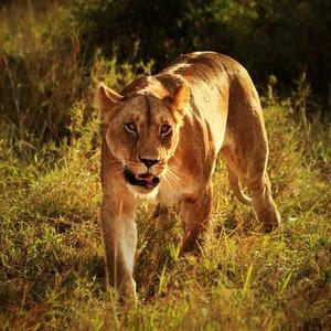 纳库鲁游记图文-经典非洲 狂野肯尼亚
