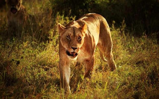 经典非洲 狂野肯尼亚