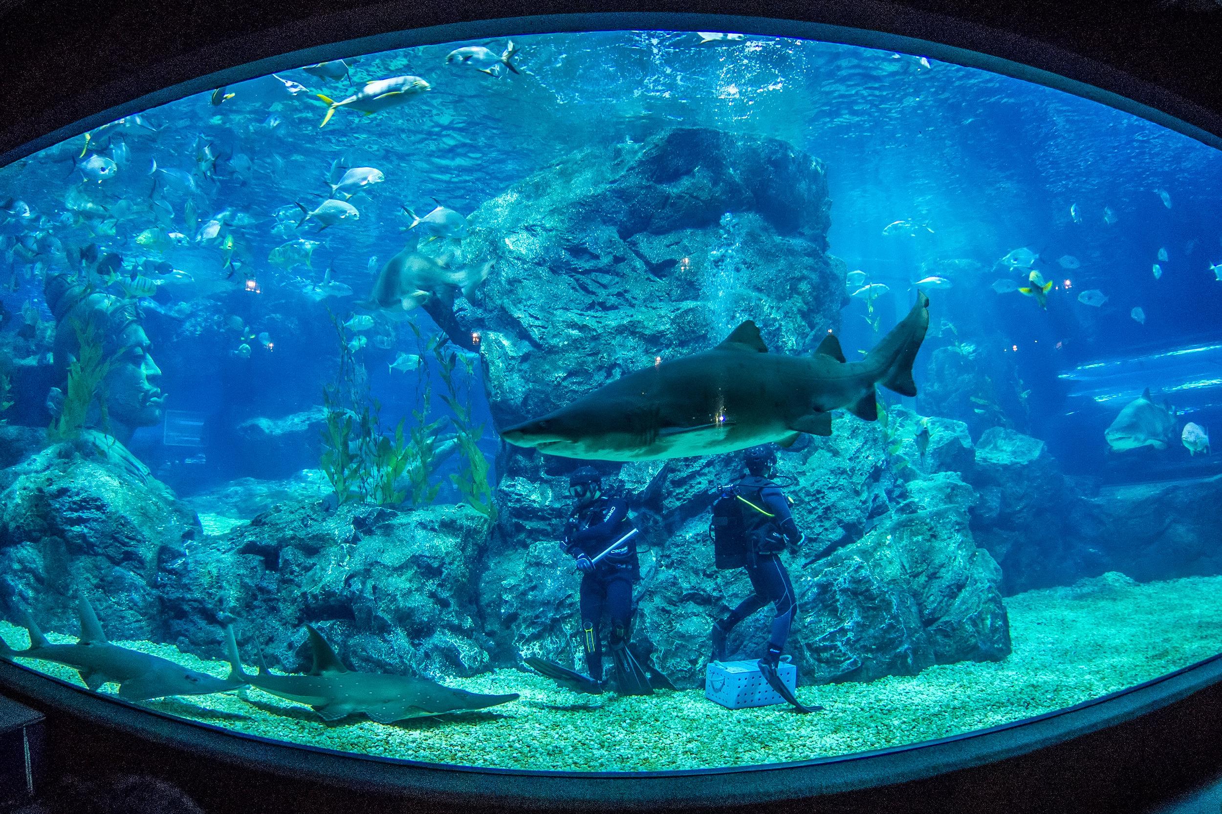 曼谷暹罗海洋世界