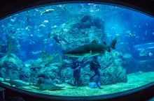 情迷蔚蓝世界   这些迷人的水族馆,看看你去过几个?