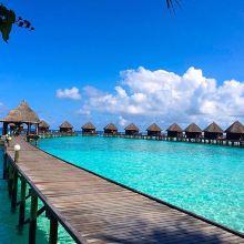 蓝色美人蕉岛图片