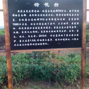 龙湾遗址展示园旅游景点攻略图