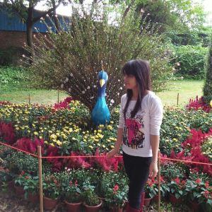 小榄菊花会旅游景点攻略图