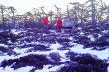 踏雪观星神鳌背——寒冬再闯秦岭第二高峰