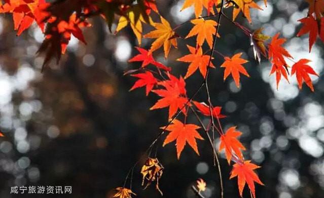 秋日童话 | 咸宁秋天这些地方最美!