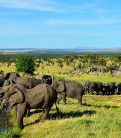 [坦桑尼亚游记图片] Green Season @ Tanzania 2014年4月