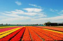 荷兰最美的时节就要到啦,带上这份2018荷兰赏花全攻略出发吧!